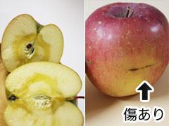 喜多方 平塚りんご園 サンふじ お得な10kg箱詰め