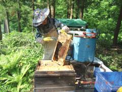 喜多方 三浦養蜂場 会津産とちの蜂蜜「なめてみらんしょ」