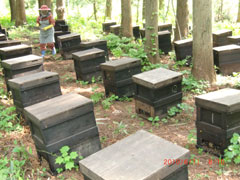 喜多方 三浦養蜂場 会津産アカシアの蜂蜜「なめてみらんしょ」