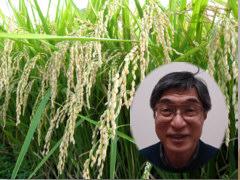 会津喜多方の低農薬米 村岡農場の特別栽培米